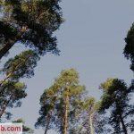 Watch Porno Hub Online – Errotica-Archives presents Black Fox in Watermelon – 11.03.2018 (MP4, FullHD, 1920×1080)